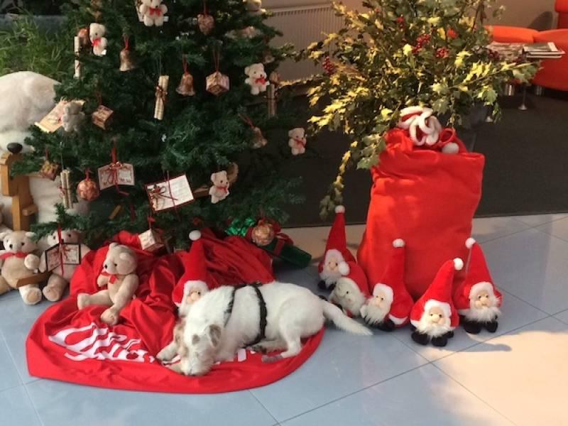 Frohe Weihnachten und ein glückliches Neues Jahr 2019